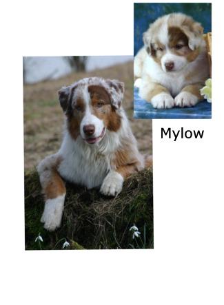 mylow